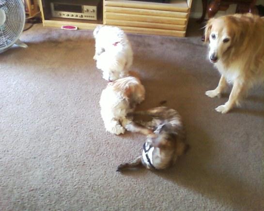Xiao Li, K.O., Heidi, and Lexis