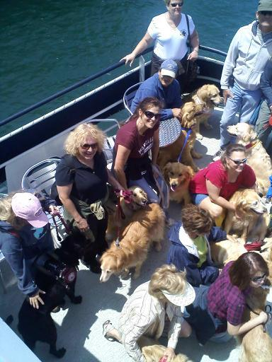 Me (black shirt) Lexis and gaggle of goldens
