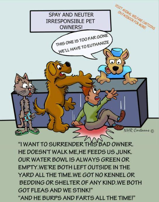 surrender owner