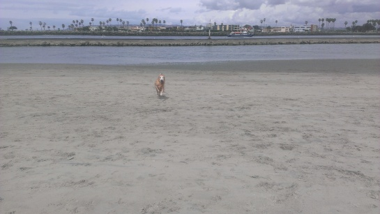 Lexis turned 11 today! She is running back to me, she always gets to the water before me.