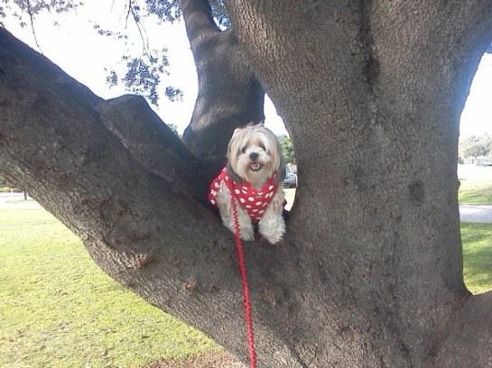 heidi in tree