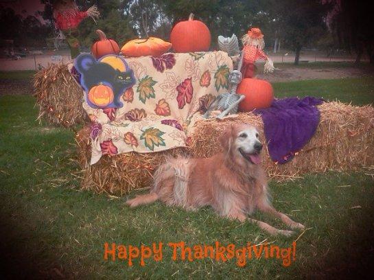 lexi thanksgiving custom