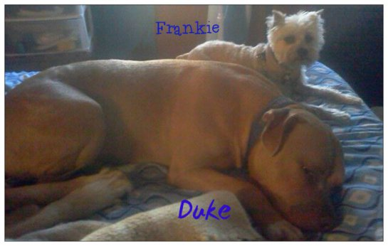 duke and frankie custom