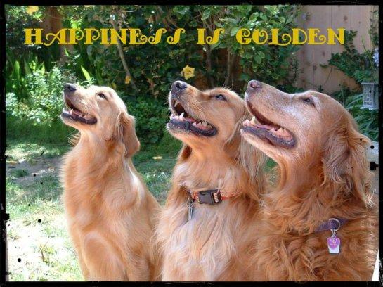 happiness is golden