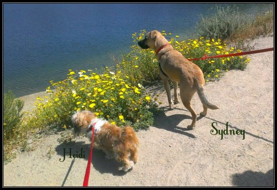 heidi n syd at lake custom