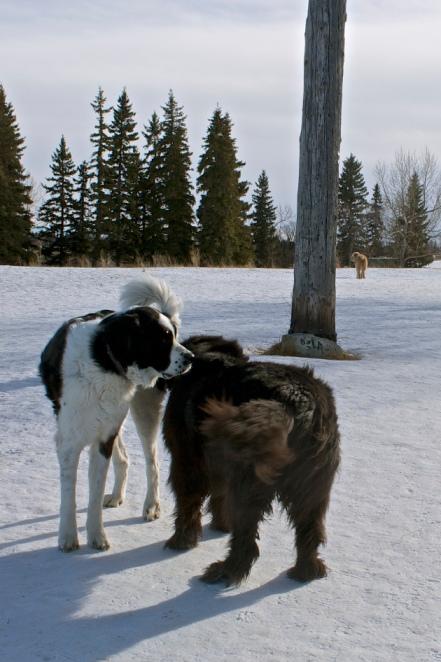 Moses meets a bigger dog