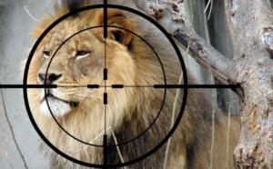 care 2 Lion