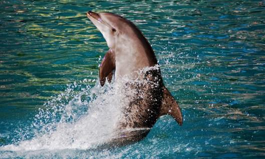 dolphin-1200x720