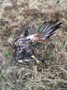 A hawk carrying a snake hit a power line which sparked a fire in Sorrento Valley, fire officials said.